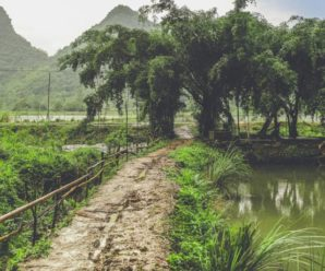 Tam Coc Rice Fields Resort, Ninh Bình ***
